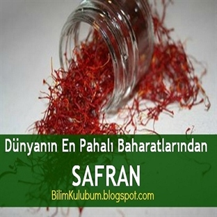 Dünyanın En Pahalı Baharatlarından SAFRAN