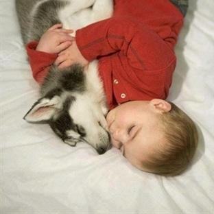 Hayvanlar ve Çocukların Harika Dünyası!