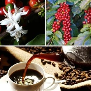Kahve İle Aromatik Yolculuk