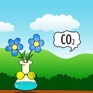 Karbondioksitin Fotosentezde Çift Rolü