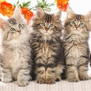 Kedilerle İletişim