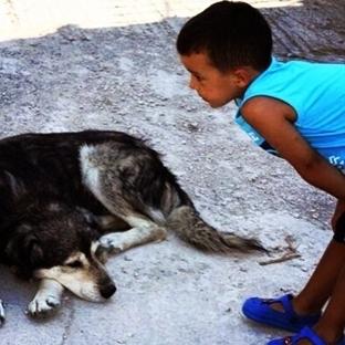 köpek severken dikkat edilecek noktalar