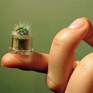 Mini Bitki Anahtarlık