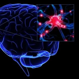 Nöronlar Görüntülendi