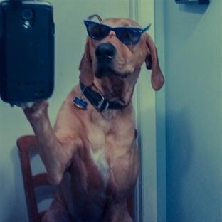 Selfie ne demek ? Selfie Fotoğraf nedir?