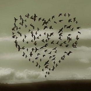 Aşk'a Mola