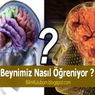 Beynimiz Nasıl Öğreniyor ?