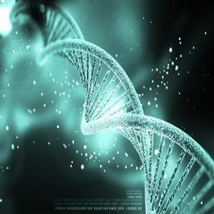 DNA-GPS ile 1000 Yıla Kadar Araştırılabiliyor