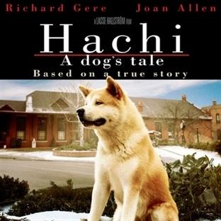 Hachi, Bir Köpeğin İnsana Göz Yaşartan Hikayesi
