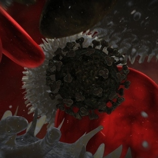 HIV'in yaşam döngüsü