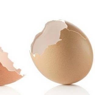 Yumurta Kabuğundaki Mucize
