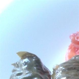 Zeytinyağlı Taze Yaprak Sarması