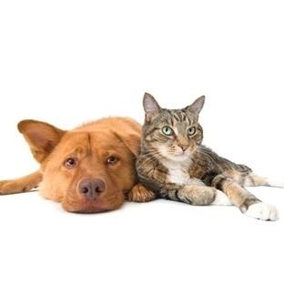 Kedi İnsanı ve Köpek İnsanı.. Siz Hangisisiniz?
