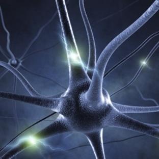 Merkezi Sinir Sistemi