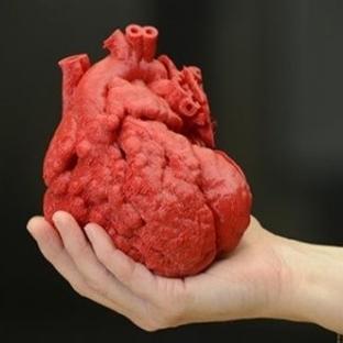 3D Yazıcılar Artık Organ Üretiyor