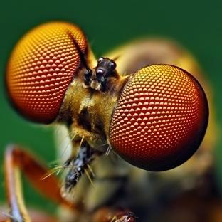 Blogculuk hatası; At sineğini bin kelimede anlatma