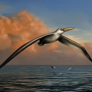En Büyük Kuş 7 metrelik Kanata Sahipti
