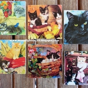 Kedili Bardak Altlıkları ve Sahaflık Kitaplar...
