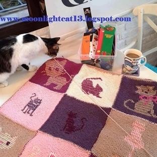 Kedili Battaniyem Oluşurken