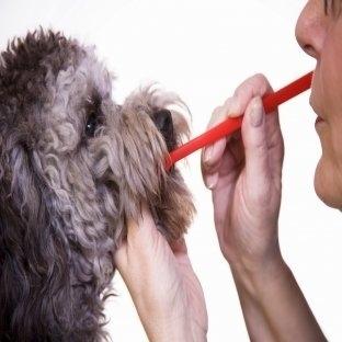 Köpeklerde Ağız Kokusu ve Tedavi
