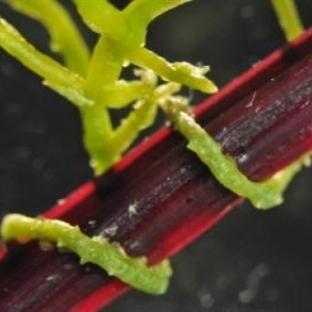 Bitkilerin Birbiriyle Moleküler İletişim Kuruyor