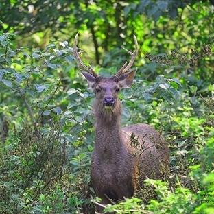 Chitwan Milli Parkı .. Nerede ? Nasıl gidilir ?