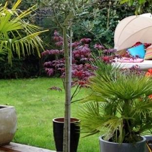 Çim bahçe düzenlemeleri