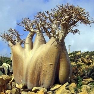 Dünyanın En İlginç Ağaçları