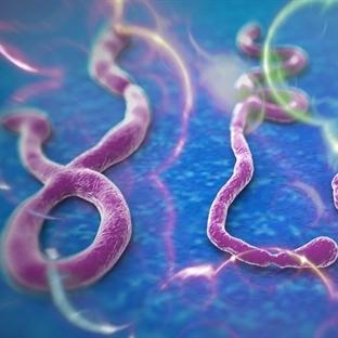 Ebola virüsü nedir? Seyahat için riskli bölgeler n