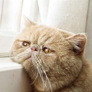 Evde Sahibinin Dönüşünü Bekleyen Kediler