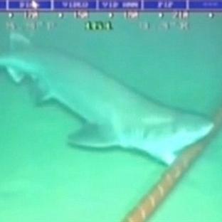 Google denizaltı kablosuna köpek balığı saldırısı