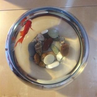 Kavanozdaki Balık