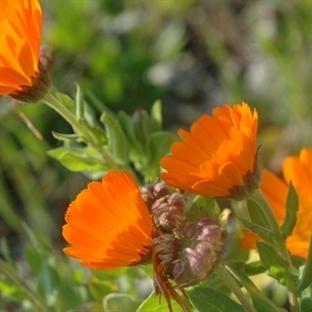 Mevsim Çiçeklerinden Bir Demet