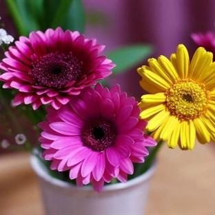 İnternetten nasıl çiçek gönderilir?