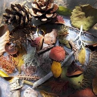 Sonbahar Çalı Çırpısından Ne Yapmalı?