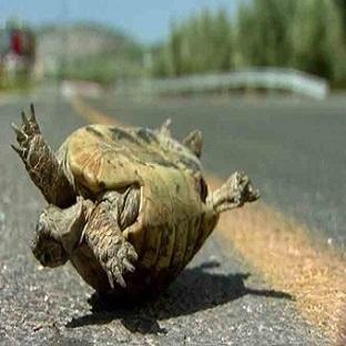 Ters Dönen Kaplumbağa!!!