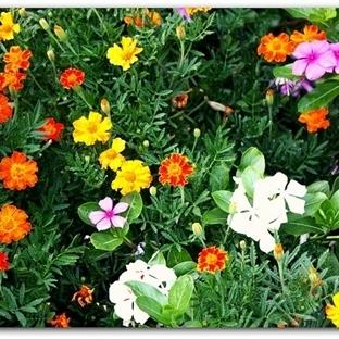 Bahçenize En Güzel Seçenekler