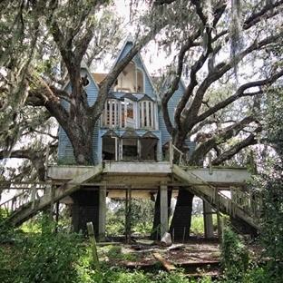 Hayalimizdeki Ağaç Evler