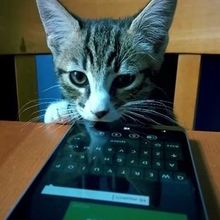 Kediler de akıllı telefon kullanır