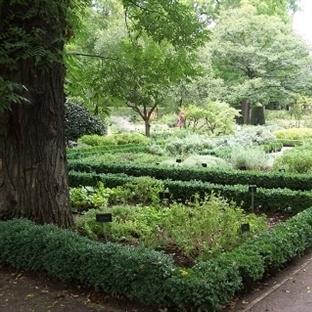 Madrid Kraliyet Botanik Parkı