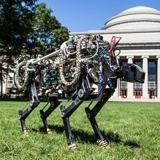 MIT'nin Robot Çitası Kablolarından Kurtuldu