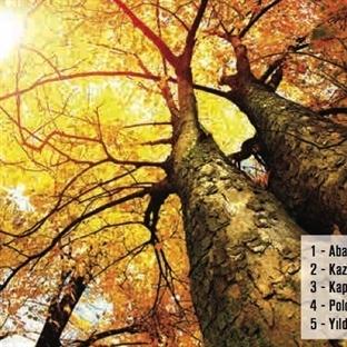 Sonbaharda Yapılacak 11 Şey
