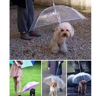 Yaratıcı Tasarıma Sahip Şemsiye Modelleri