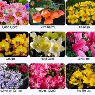 En Güzel Kış Çiçekleri - Bakımı ve Yetiştirilmesi
