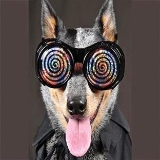 Hayvanlar Hipnotize Edilebilir Mi? Evet
