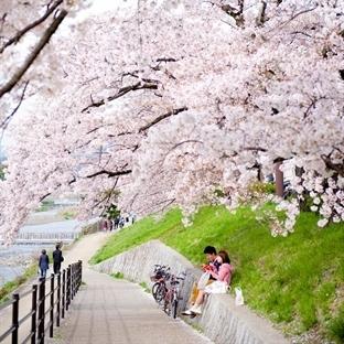 Japonya ve Japonlar Hakkında Bilmedikleriniz