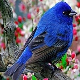 Kahve Falında Kuş Şekli Görmek