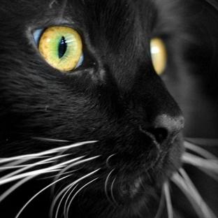 Minik Sevimli Kara Kediler