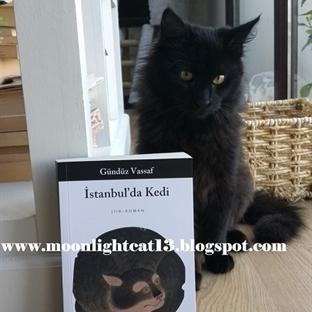 İstanbul'da Kedi - Gündüz Vassaf * Kış Okuma Şenli