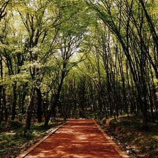 Belgrad Ormanı'nda 6 km.'yi Tamamla